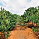 Tips for Developing a Business Plan for Your Coffee Farm